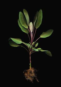 Herbarium root photography by Anne Hoerter Winner International Photography Awards #beauty #beautiful #food #photography #competitions #contest #BeautifulNow