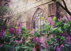 Lilacs - Brugge's central cathedral