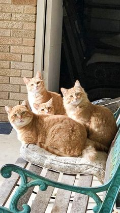 Fluffy Kittens, Cute Cats And Kittens, Cool Cats, Kittens Cutest, Pretty Cats, Beautiful Cats, Image Chat, Orange Tabby Cats, Photo Chat