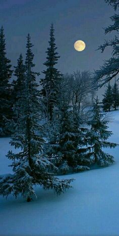 New photography winter night beautiful moon 28 ideas Winter Szenen, Winter Night, Winter Moon, Winter Blue, Winter Trees, Winter Photography, Nature Photography, Landscape Photography, Moonlight Photography