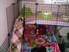 Guinea Pig Cage Ramp
