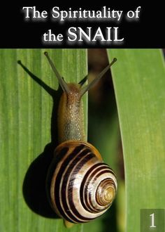 The Spirituality of the Snail – Part 1 « EQAFE
