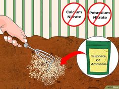 Acidifying with Iron Sulfate and Ammonia Fertilizers