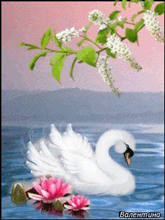 Лебедь - анимация на телефон №1323735