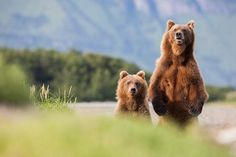 On Tenterhooks Photo by Michel Zoghzoghi � National Geographic Your Shot