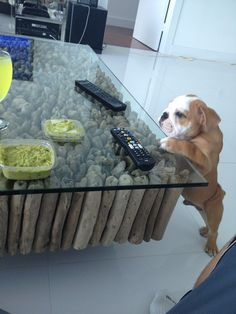 I am pinning this because of that ridiculously awesome coffee table and of course the bulldog!
