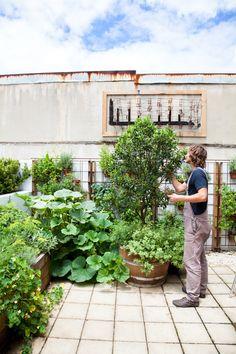 Alexandria Gardens - Urban Growers