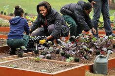 Michelle Obama: Planting seeds in the next gneration. Michelle encourages local students to garden at the White House Kitchen Garden in The garden of fruits and veggies feed the Obamas, their guests, and a local food shelter. (Photo by Getty Images) Michelle Obama Biography, Michelle Obama Photos, Barack And Michelle, White House Garden, Barack Obama Family, American First Ladies, Mr President, Beautiful Family, The Guardian