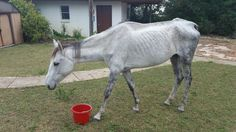 Fantasy is the new foster horse on the ranch! She's just here to eat and get fat. She's hungry but happy!