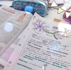 Cute Notes//Blue//Purple//Green