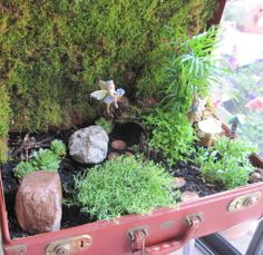This fairy garden was created in a vintage suitcase that had been bought at an auction.