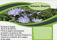 کاسنی # achicoria # Chicory Barcelona, Plants, Vitamin E, Fat, Barcelona Spain, Plant, Planets