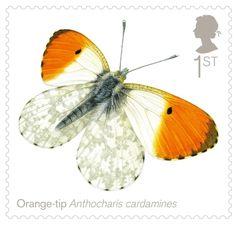 Orange Tip butterfly - UK postage stamp
