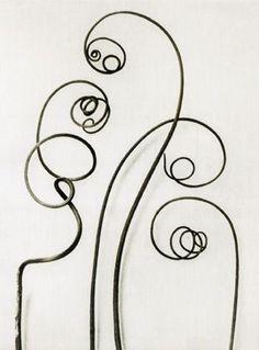Karl Blossfeldt, Bryonia alba White bryony, tendrils