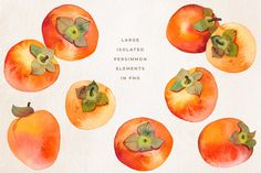 Watercolor Persimmon Collection is a pack of 6 persimmons (hand-painted from life and then scanned at 1200 dpi and cleaned out of background), as well as Fruit Illustration, Illustration Artists, Food Illustrations, Graphic Illustration, Persimmon Fruit, Orange Aesthetic, Fruit Arrangements, Fruit Art, Arte Floral