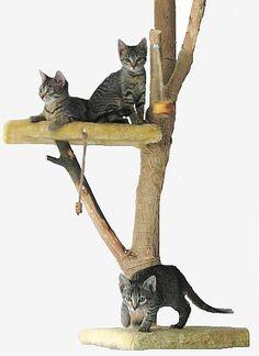 Árvore de gatos simples de fazer.
