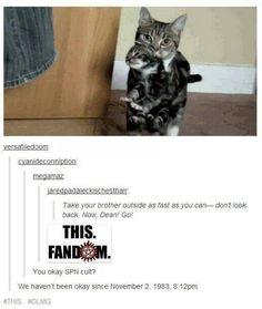Supernatural cats