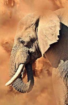 Such tender eyes❣️ Mammifères Elephant Love, Elephant Art, African Elephant, Animals And Pets, Baby Animals, Cute Animals, Wild Animals, Elephant Photography, Animal Photography