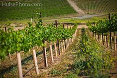 Romantic Wineries