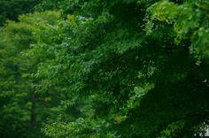 2014年8月 宿泊施設:大河原温泉 かもしか荘