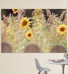 Ein kleines Stück vom Sommer. Herrliche leuchtende Sonnenblumen, in einem Haferfeld, ein Stück Natur hinter dem Zaun.