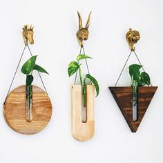 These cool camping ideas include hacks, tips and tricks that will save you time, money and frustrati Plant Wall Decor, Wall Decor Design, Wood Projects, Woodworking Projects, Arte Pallet, Wood Vase, Wood Worker, Melbourne, Diy Planters
