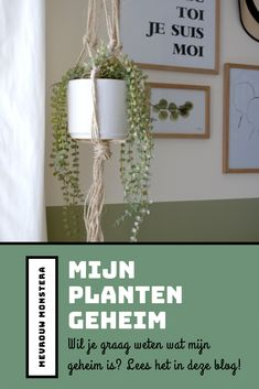 Zou je ook willen weten wat mijn plantengeheim is? Lees gauw mijn blog! #plantengeheim #planten #planten #kamerplanten #indoorgreen #urbanjungle #plantenblog #plantblog #blog Ficus Pumila, Planter Pots, Blog, Ideas, Hush Hush, Blogging, Thoughts