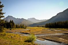 lamar valley @Yellowstone