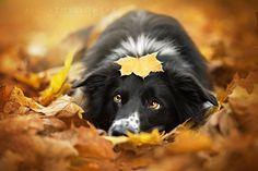 Không khí mùa thu khiến bạn cảm thấy thật dễ chịu và sảng khoái, những người bạn…