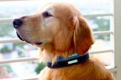 Designer Dog Collars by Legitimutt - $110