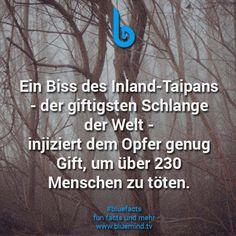 #bluefacts #fakten #wissen #weisheit #tiere #animal #spruch
