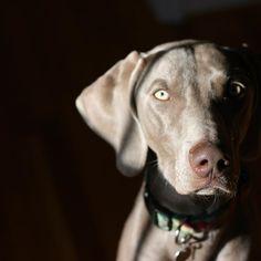 Happy #nationaldogday to my sweet girl  ferocious guard dog!
