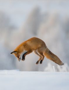 The Beauty of Wildlife — Photo Series | ~ Hunting ~ Images by © • Dmitry...