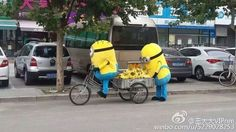 The juxtaposition of the two Minions and a three-wheeler — a form of transport often used by Chinese street vendors — melted the hearts of Chinese internet users.   Minions Are Roaming The Streets Of China Selling Bananas