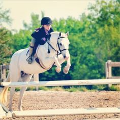 Plain White T - Frosty - Welsh Pony - Hunter for sale on Bigeq.com