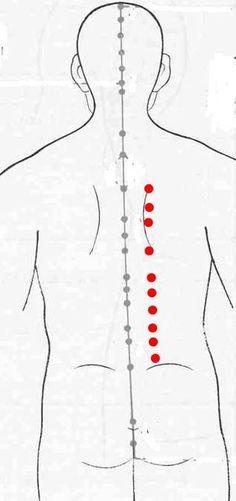 Cada vez que imparto cursos, me sorprende la cantidad de terapeutas que no emplean habitualmente los puntos Shu de la Espalda. A través d...