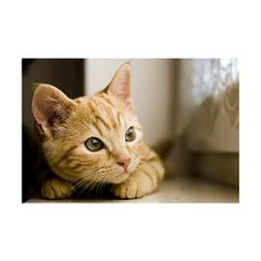 ❤ ❤ liked on Polyvore featuring animals, cats, pictures, photos and backgrounds