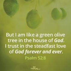 Psalm 52:8 ~ God's steadfast love