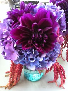purple - rose bredl