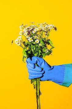 art direction | daisies | Maurizio Di Iorio Photography