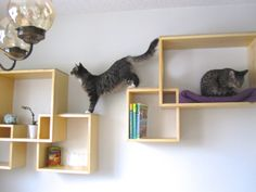 Use your wall space! - Pearl Pratley - Use your wall space! How about some triple function shelves? Your cats get the top, you get the middle, and your wall gets the rest! Where form meets function! Floating Cat Shelves, Cat Wall Shelves, Cat Wall Furniture, Cat Cube, Cat Stairs, Cat Gym, Cat House Diy, Cat Playground, Cat Climbing
