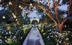 """Preston Bailey created what he calls an """"enchanted garden,"""" illuminating the Spanish moss–bedecked trees with glimmering lanterns."""