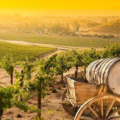#Grape #Vineyard with Vintage #Barrel #Carriage #Wagon #Landscapes #Nature - Dollar Stock Images- http://kozzi.tv/U6Mj6