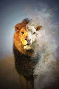 Jesus the Lamb of God and the Lion of the tribe of Judah.