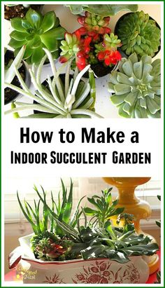 If you think that you don't have a green thumb, then this project might just be for you! Learn how to make an indoor succulent garden. Succulents are the perfect house plant! They are nearly indestructible and don't require frequent watering like most indoor house plants!