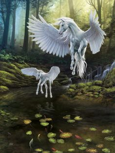 Aww that's my white Pegasus teaching his daughter how to fly. (I have to get the female Pegasus and foal) Unicorn And Fairies, Unicorn Fantasy, Unicorn Art, Magical Creatures, Fantasy Creatures, Beautiful Creatures, Pegasus, Winged Horse, Unicorn Pictures