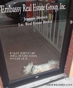 Downtown #SafetyHarbor. Yesterday, we walked by this office and noticed this little cutie looking patiently out the window. Just a few moments later, we walked by again to find him sound asleep. Who is this mystery darling, anyway? #cutedog #realestate