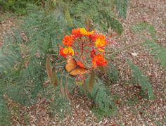 in Rancho - love that Arizona, Scene, Flowers, Nature, Plants, Naturaleza, Plant, Royal Icing Flowers, Nature Illustration