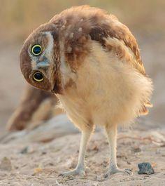 New Ideas For Photography Nature Animals Friends Cute Birds, Pretty Birds, Beautiful Birds, Animals Beautiful, Cute Owl, Beautiful Pictures, Animals Amazing, Beautiful Men, Nature Animals