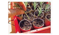 Lavendel vermehren Hydrangea Seeds, Hydrangea Care, Love Garden, Peaceful Places, Different Plants, Pergola Designs, Back Gardens, Planter Pots, Exterior